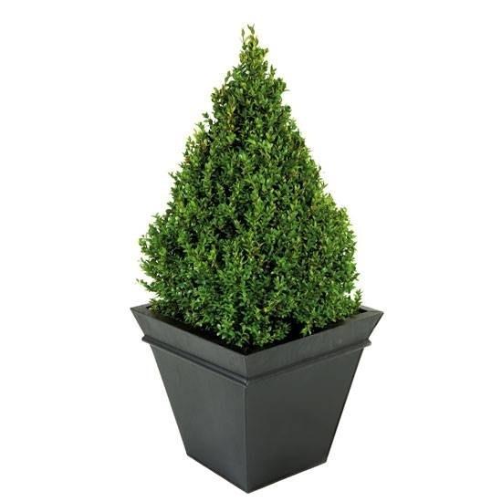 piante vendita online - Fiorista