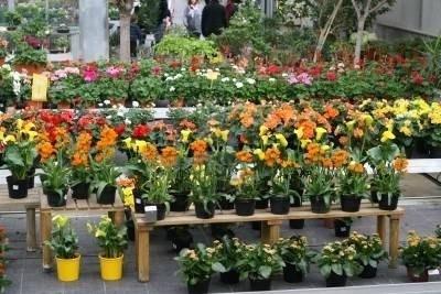 Piante vendita fiorista for Piante da comprare