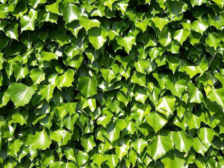 Vendita alberi online fiorista for Vendita piante ornamentali