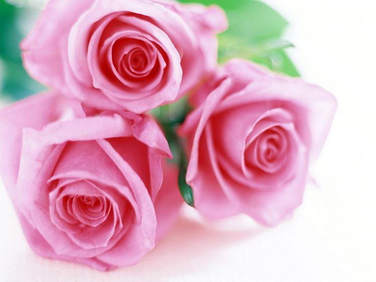Popolare linguaggio dei fiori rosa - Linguaggio dei fiori SM76
