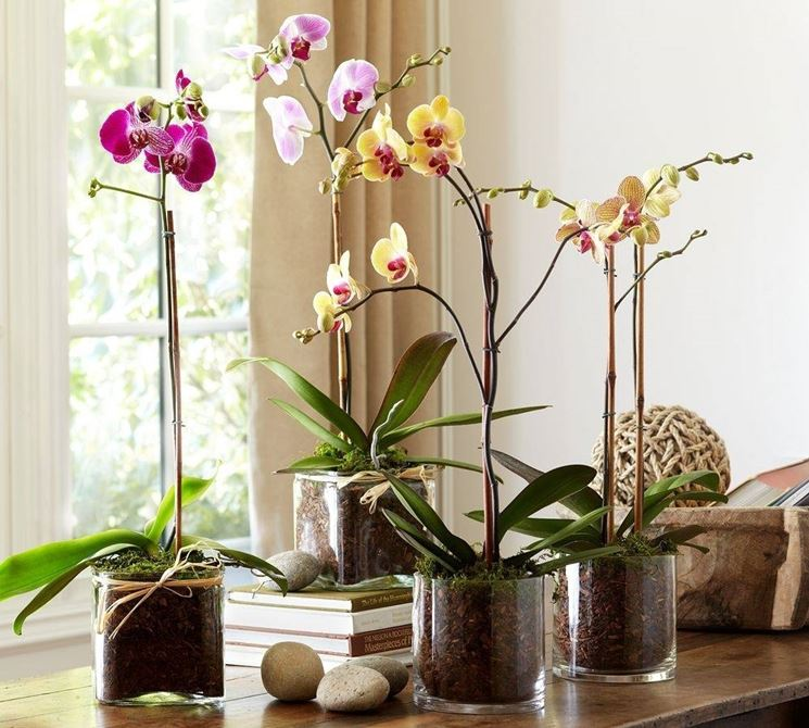 Una composizione di vasi di orchidea
