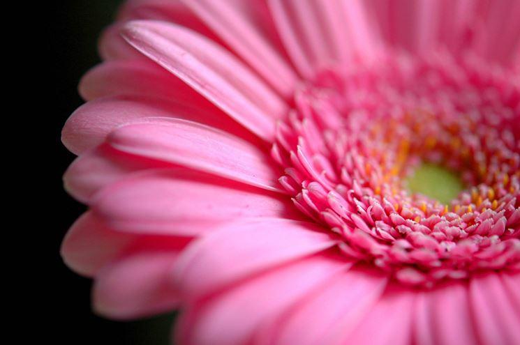 Доставка цветов  flowerstodayru