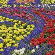 Allestire un campo di fiori