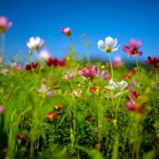 fiori di campagna
