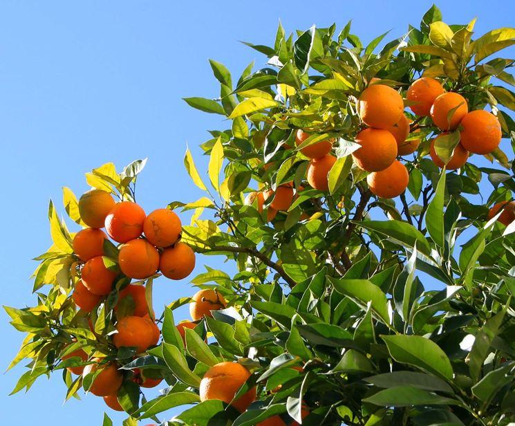 ramo di arancio