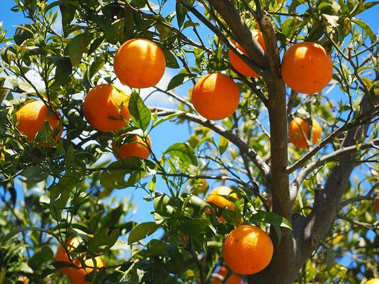 arancio frutti