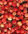 """Prunus avium"""""""