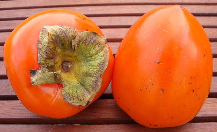 Kaki diospyros kaki diospyros kaki frutteto kaki for Cachi persimon