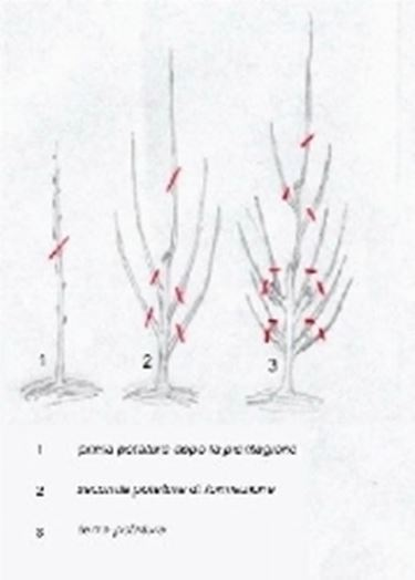 Cordone verticale