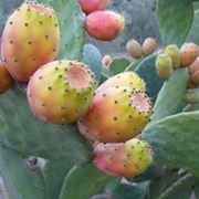 frutti tropicali nomi