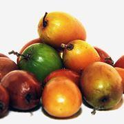 giuggiola frutto