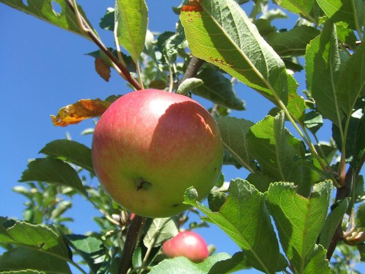 Calendario Trattamenti Frutteto.Trattamenti Nel Frutteto Frutteto Trattamenti Nel