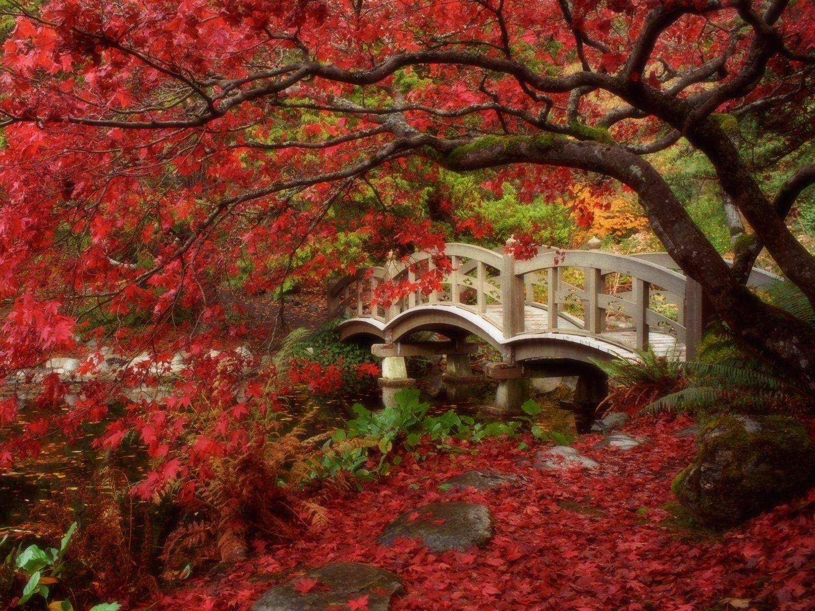 Come creare un giardino giapponese giardini orientali - Giardini giapponesi ...