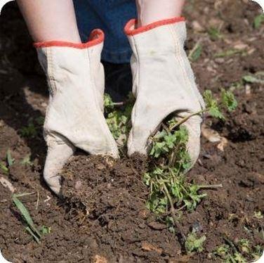 Tecniche di coltivazione