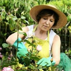 Coltivare piante botanica for Piante secche ornamentali