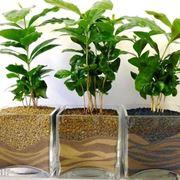 la respirazione delle piante
