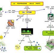 respirazione piante