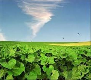 Le piante convertono la luce e l'anidride carbonica in sostanze necessarie alla vita