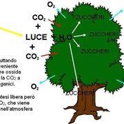 fotosintesi clorofilliana riassunto