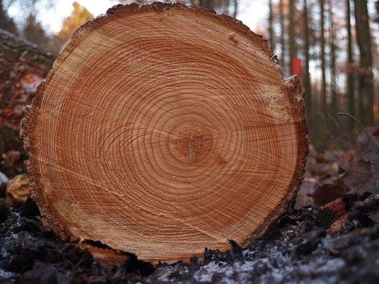 I tessuti del legno