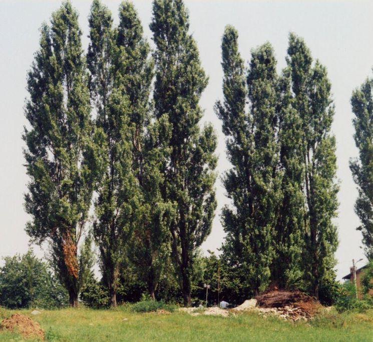 Piante latifoglie botanica caratteristiche delle - Nomi di piante da giardino ...