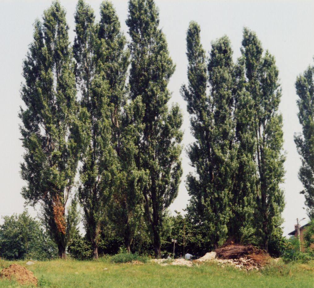 piante latifoglie