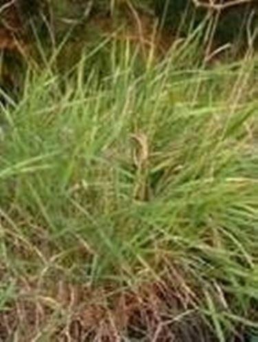 Diserbo prato domande e risposte giardinaggio - Quando seminare erba giardino ...