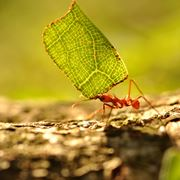Invasione di formiche domande e risposte giardinaggio - Eliminare topi dal giardino ...