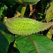 pianta dei pappagalli