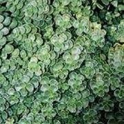 Piante per terrazze piante da terrazzo piante per terrazzo for Sempreverdi da balcone