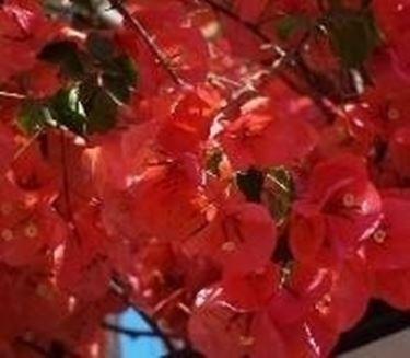 Painta in fiore
