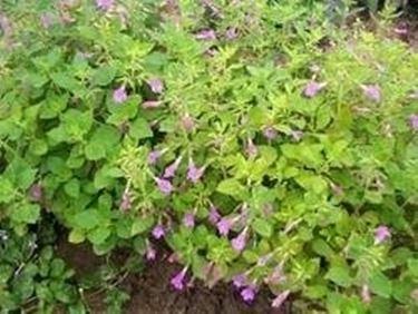 Piccoli fiori