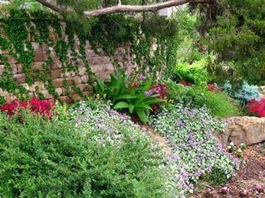 piante nel giardino roccioso