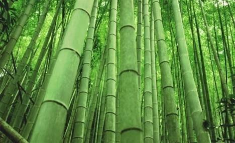 come creare un giardino zen - giardini orientali - Costruire Piccolo Giardino Zen