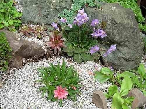 Creare un giardino roccioso giardini orientali for Giardino roccioso piante