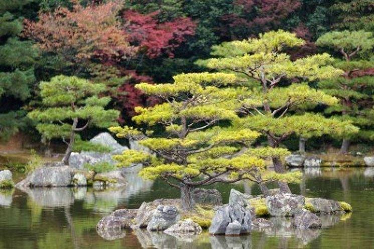 posizionare giardino giapponese