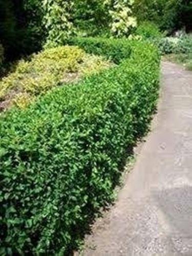 Come creare un giardino giardino fai da te for Creare un giardino semplice