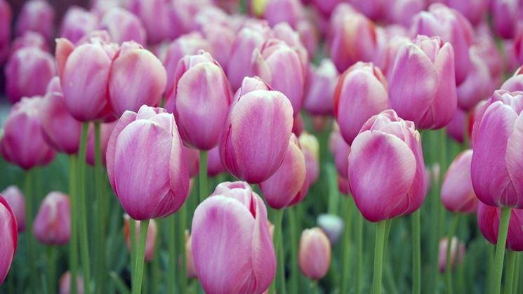come creare un giardino - Giardino fai da te