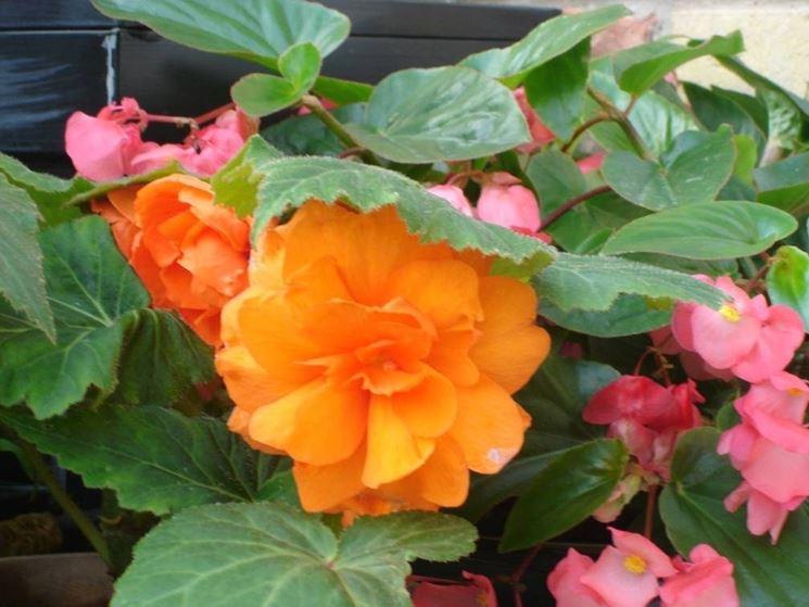 come creare un piccolo giardino - Giardino fai da te