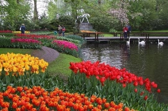 Come progettare un giardino giardino fai da te - Progettare il giardino ...