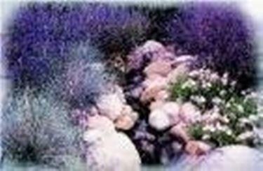 Creare giardino roccioso giardino fai da te for Giardino roccioso piante