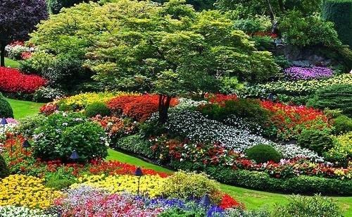 Realizzare un giardino giardino fai da te for Cespugli fioriti da giardino