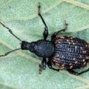 insetticidi naturali