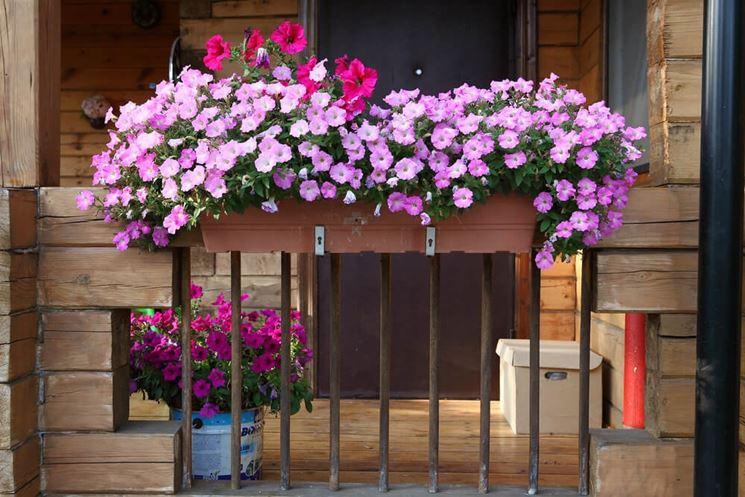 balcone di surfinie