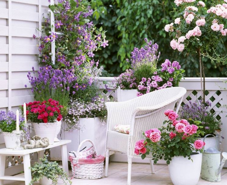 terrazzo piante da fiore