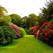 giardino in maggio