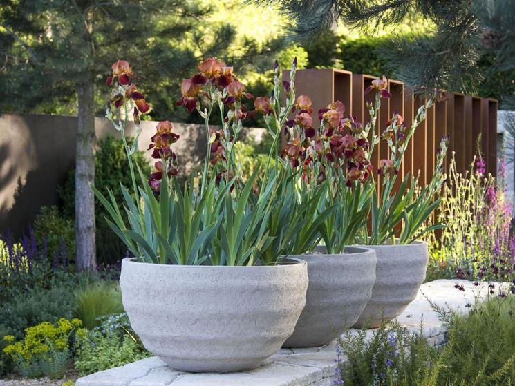giardino maggio