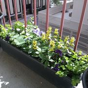 fiori per balcone marzo