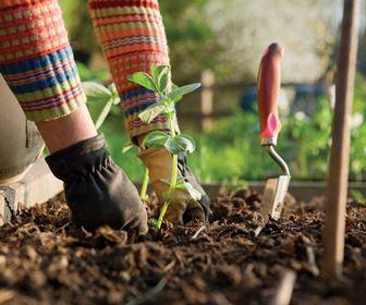 Lavori del mese giardinaggio