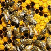 Dove vanno le api in inverno